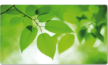 Green leaves product image